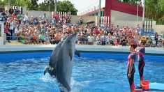Investiţie între cinci şi şapte milioane euro pentru un acvariu modern la delfinariul din Constanța, România