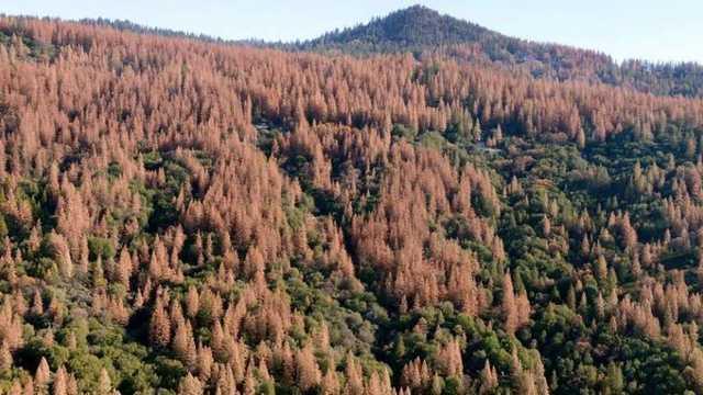 18 milioane de copaci din statul California au murit anul trecut