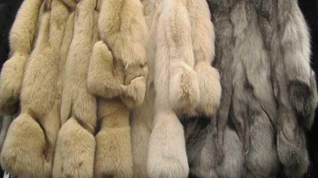 Orașul care a interzis oficial fabricarea şi comercializarea hainelor de blană. Legea intră în vigoare în 2021