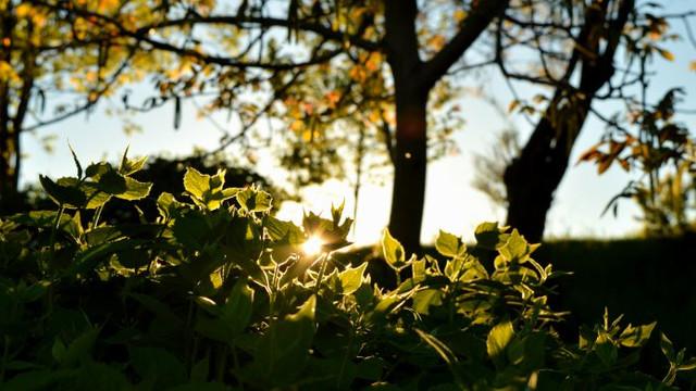 METEO | Vremea se va încălzi în zilele următoare