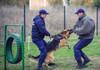 Se pricep la miros uman și la depistarea stupefiantelor și lucrează cu polițiștii. Au fost premiați cei mai iscusiți câini de la Frontieră