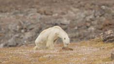 Raport ONU | Un adevărat dezastru ecologic, peste 1 milion de specii de plante și animale riscă să dispară