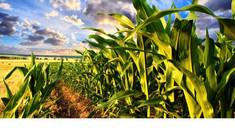Plafonul subvenției anuale acordată producătorilor agricoli va fi majorat cu 2 milioane de lei per beneficiar