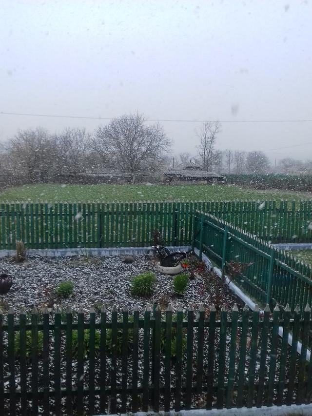 VIDEO/ FOTO   Ninge în nordul R.Moldova