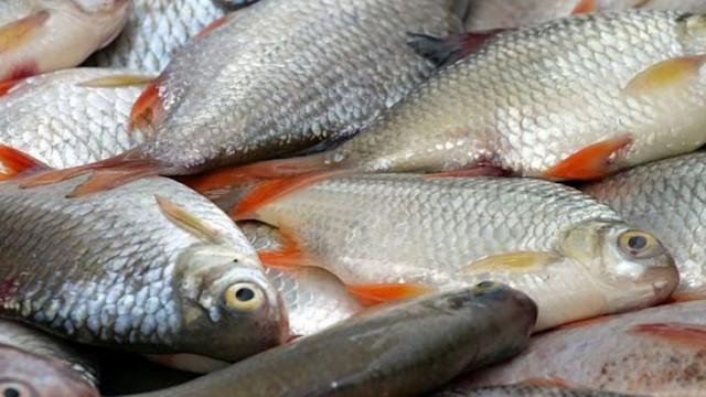 ANSA avertizează consumatorii să fie atenți la pește, cu ocazia Floriilor