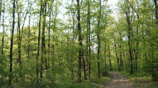 Păduri stropite contra dăunătorilor. Apicultorii sunt atenționați să închidă albinele în perioada respectivă