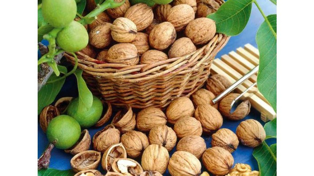 Anul acesta R.Moldova va acoperi 9% din exporturile de nuci în UE, estimează Uniunea Asociațiilor Producătorilor de Culturi Nucifere