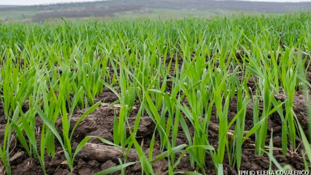 21 de proiecte vor fi finanțate în avans din Fondul Național al Dezvoltării Agriculturii