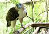 Autorităţile filipineze împrumută unui parc din Singapore o pereche de acvile dintr-o specie ameninţată cu dispariţia