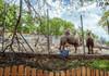 De 1 iunie, accesul copiilor la Grădina zoologică va fi gratuit