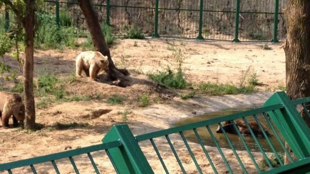 La Grădina Zoologică din Chișinău va fi amenajat un spațiu de șase mii de metri pătrați pentru urși