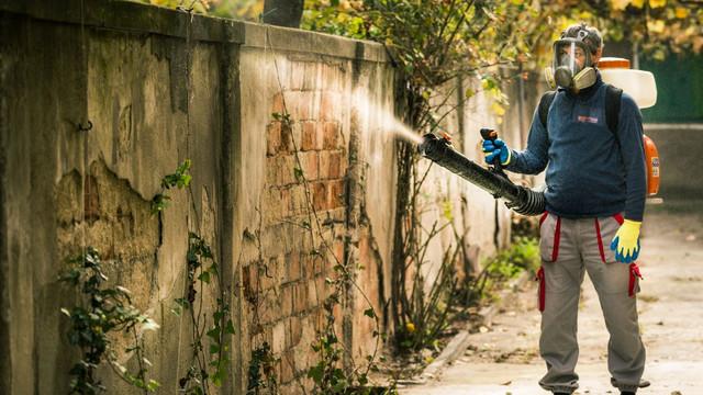 O mie de blocuri locative din Chișinău au fost deratizate