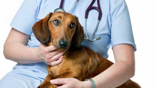 25 de veterinari americani vor opera gratuit, timp de două săptămâni, câinii fără stăpân din Chișinău