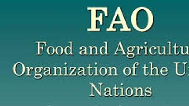 Rep. Moldova are nevoie de politici pentru a diminua risipa alimentară, reprezentant FAO