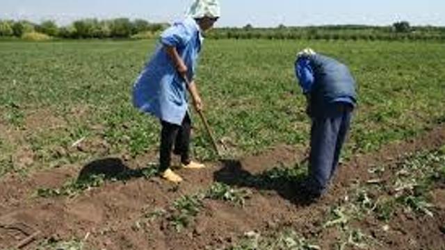 AIPA a achitat agricultorilor subvenții în sumă de aproape 50 milioane de lei