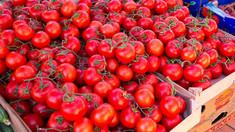 Când vom găsi în piețe roșiile autohtone cultivate în câmp deschis