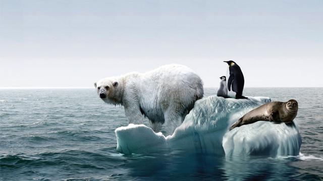 Circa 17% dintre vieţuitoarele marine vor dispărea până în 2100 în ritmul actual de încălzire globală