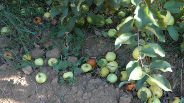 R. Moldova a aprobat o foaie de parcurs pentru prevenirea pierderilor alimentare