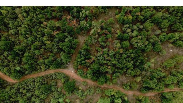Pădurile din R. Moldova vor fi inventariate