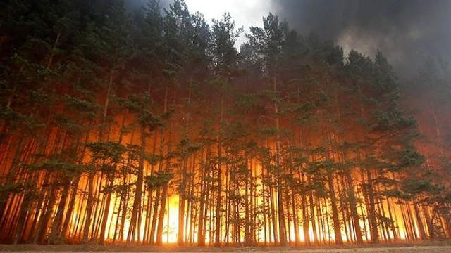 Incendiu uriaș în Siberia. Focul a înghițit o suprafață mai mare decât teritoriul Belgiei