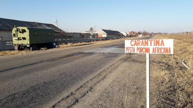 Focar de pestă porcină la Cahul. Autoritățile sistează comercializarea cărnii de porc