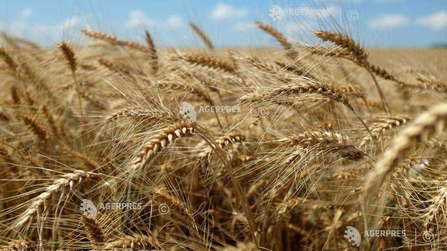 Franţa mizează pe o recoltă de 37 milioane tone de grâu în acest an