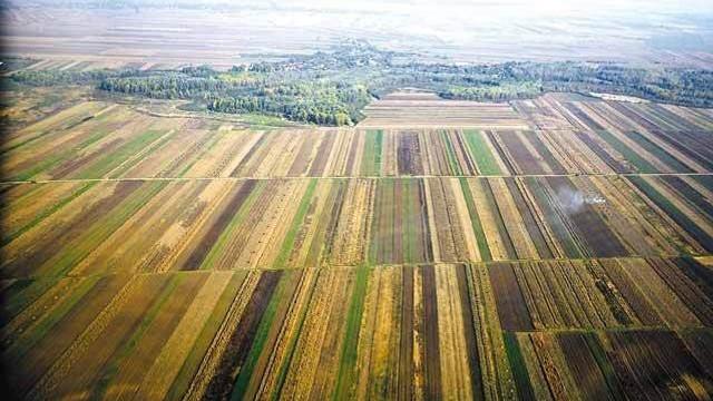 Câteva sute de proprietari din Drepcăuți se plâng că terenurile  lor ar fi fost ocupate în mod abuziv de agenți economici care ar fi protejați de demnitari