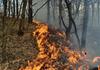 Mii de persoane au fost evacuate după ce un incendiu de pădure a izbucnit în insula Gran Canaria