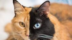 Pisicile îşi înţeleg numele, dar cel mai des aleg să îşi ignore stăpânul (STUDIU)
