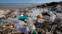 STUDIU | Microplasticul din oceane se întoarce în farfuriile oamenilor. Un om înghite echivalentul unui card bancar, de microparticule, săptămânal