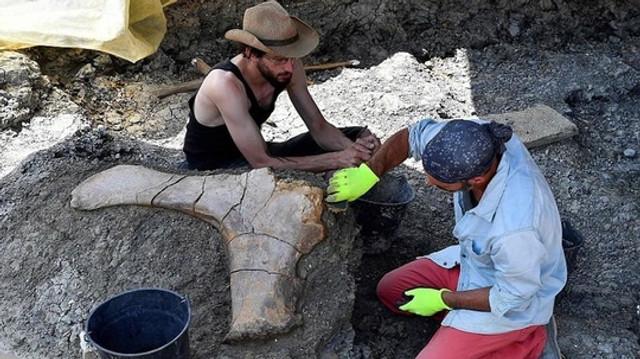 FOTO   Un femur gigant de dinozaur, descoperit în Franța