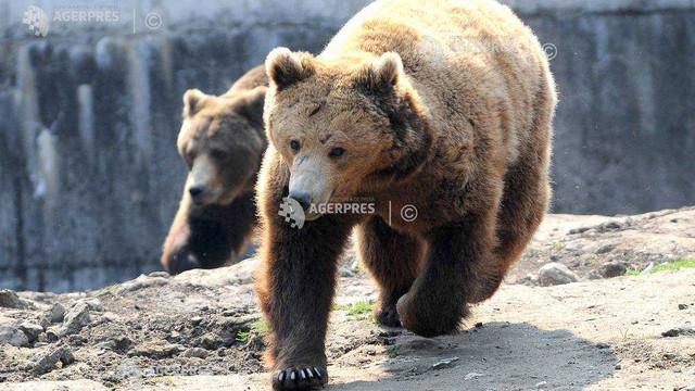 Proteste ale fermierilor francezi și spanioli față de reintroducerea urșilor în Munții Pirinei