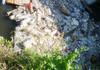 Amenzi de mii de lei pentru gunoiști neautorizate