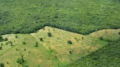 STUDIU | Lumea pierde în fiecare an suprafeţe împădurite de dimensiunile Regatului Unit