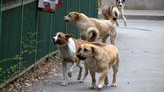 Un serviciu pentru protecția animalelor va fi creat la Chișinău