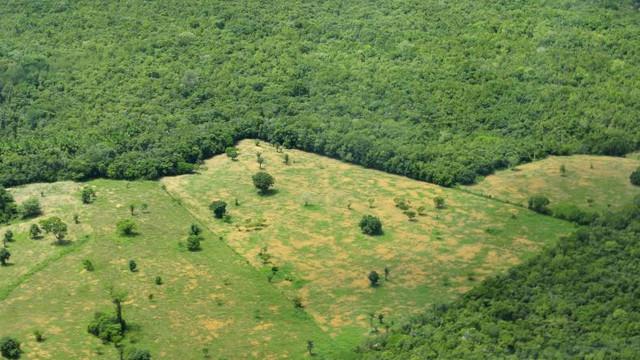 STUDIU | Lumea pierde în fiecare an suprafețe împădurite de dimensiunile Regatului Unit