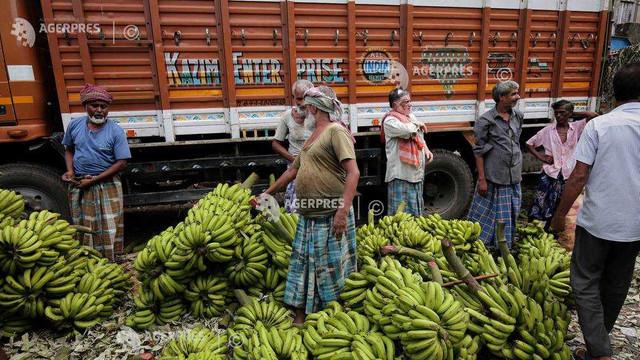 Studiu: Schimbările climatice, o ameninţare la adresa recoltelor de banane