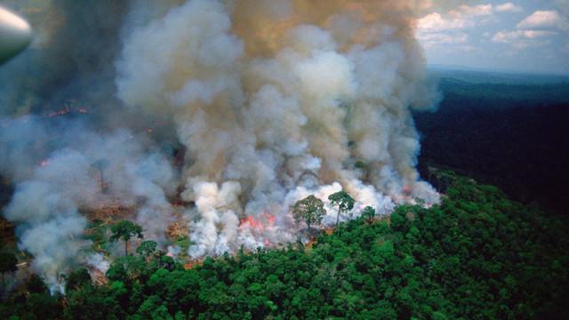 Brazilia | Rata defrișărilor din pădurea amazoniană, aproape dublă față de anul trecut. Există riscul altor focare