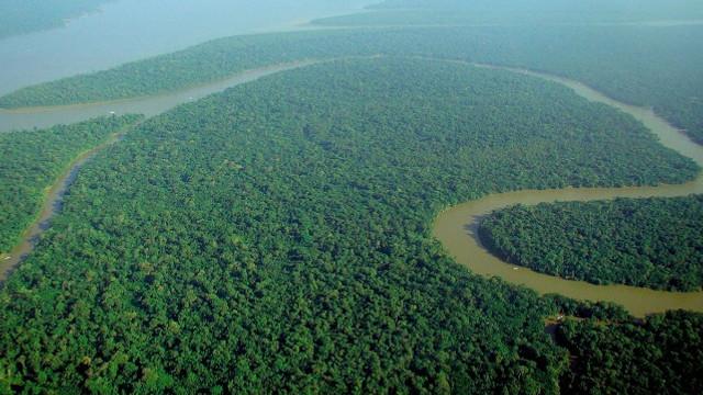 Descoperire rară în padurea amazoniană: țiparul de peste 2 metri care descarcă 860 de volți