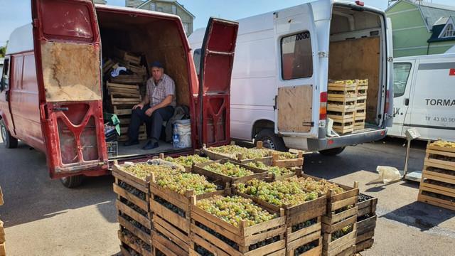 În capitală a fost deschis un târg sezonier de struguri. În prima zi au participat 22 de producători