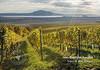 Un vin din R.Moldova, prezentat lângă Arcul de Triumf, printre cele mai bune vinuri din 15 țări ale lumii