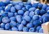Federația Rusă a interzis importul a 39 tone de prune și struguri moldovenești