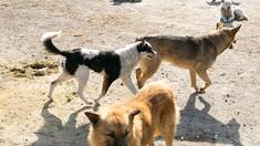 Soluțiile candidaților la primăria Chișinău pentru animalele fără stăpân