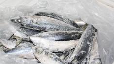 Criza peştelui contaminat cu paraziţi nu a fost soluţionată (Mold-street)