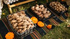 """Un festival al cartofilor este organizat astăzi, pentru al doilea an consecutiv, în satul Râșcova, din raionul Criuleni, cunoscut și ca """"Vatra Cartofarilor"""""""
