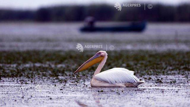 Ziua mondială a păsărilor migratoare (ONU)