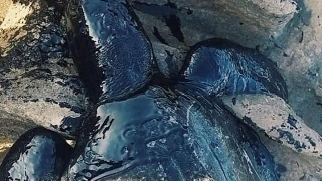 Misterioasele pete de petrol, cu origine necunoscută, care au poluat peste 100 de plaje din Brazilia