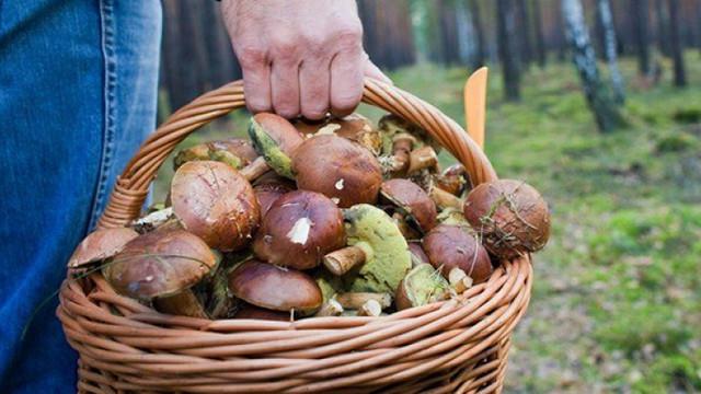Număr mare de intoxicații cu ciuperci în R. Moldova în ultimele zile. O mare parte din victime sunt copii
