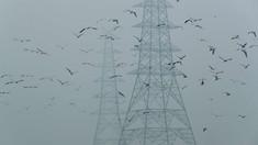 Poluarea fonică ameninţă supravieţuirea a peste 100 de specii (studiu)