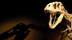Cel mai bine păstrat schelet de stegozaur a fost găsit într-o magazie din Portugalia